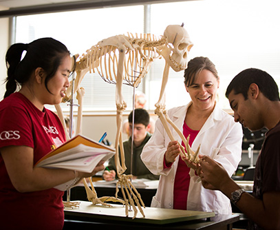 Photo of students in a lab. Link to Life Stage Gift Planner™